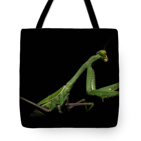 Katydid In Black Tote Bag