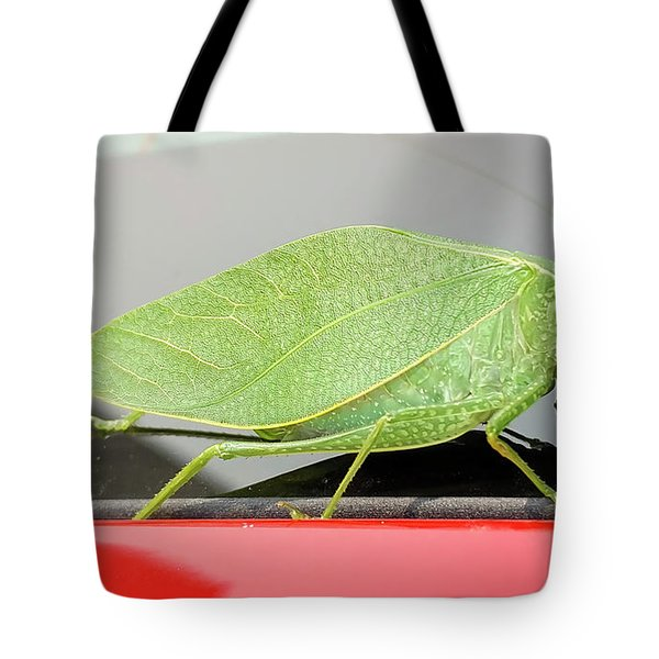 Katydids- Bush Crickets Tote Bag