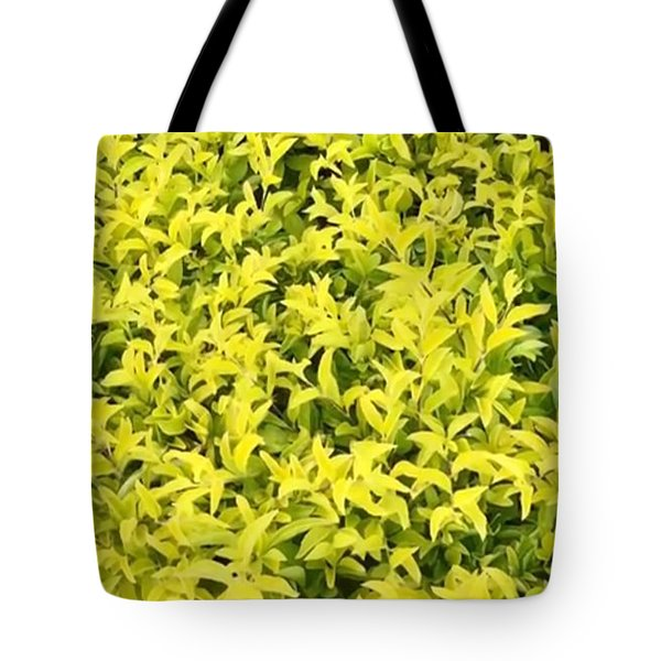 Tote Bag featuring the photograph Keep It Bright by Cindy Charles Ouellette