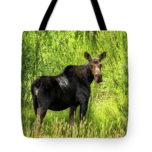 Keep Your Distance Wildlife Art By Kaylyn Franks Tote Bag