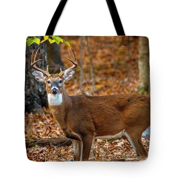 Kentucky Eight #2 Tote Bag