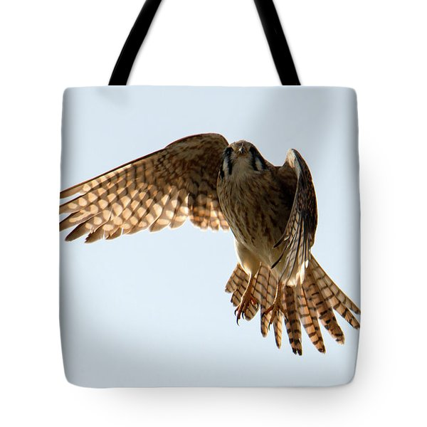 Tote Bag featuring the photograph Kestrel Hover by Mike Dawson