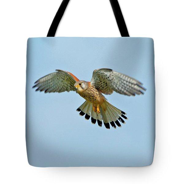 Kestrel In The Wind . Tote Bag