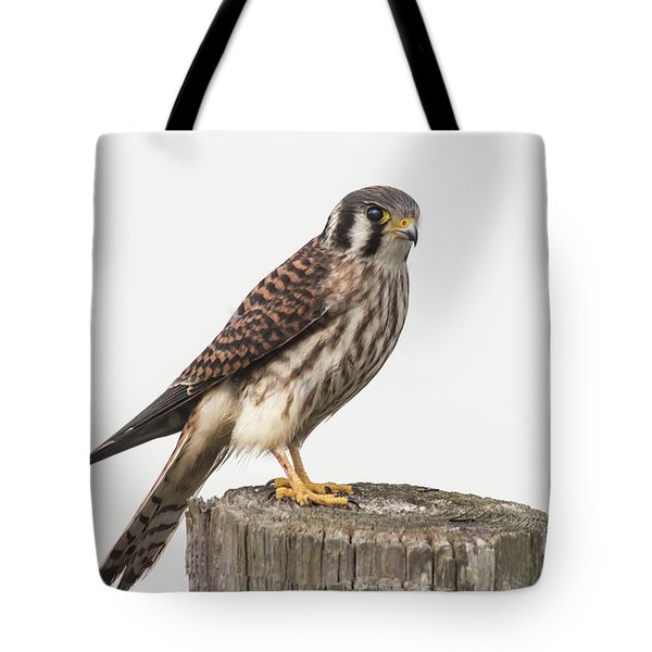 Tote Bag featuring the photograph Kestrel Portrait by Robert Frederick