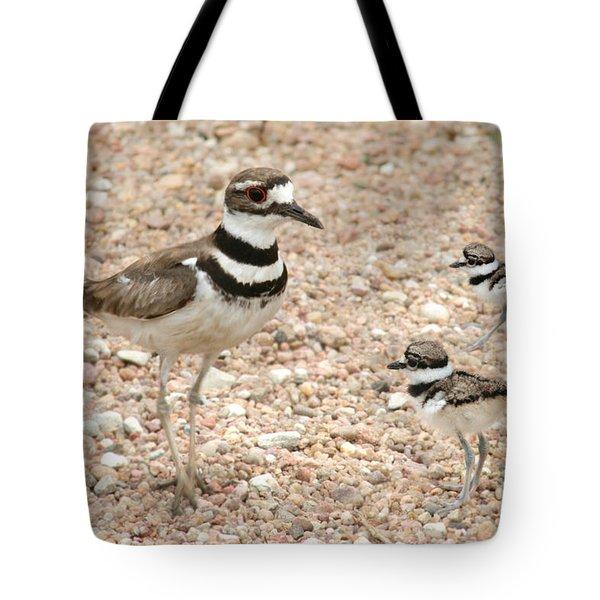 Killdeer And Chicks Tote Bag