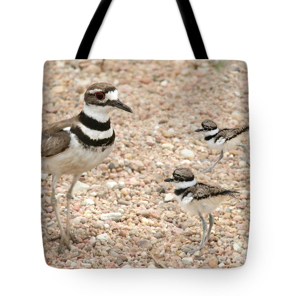 Killdeer And Chicks Tote Bag