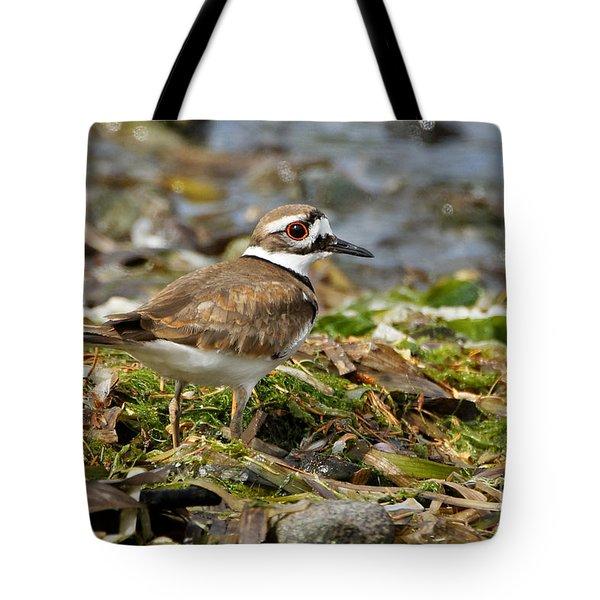Killdeer At The Coast Tote Bag