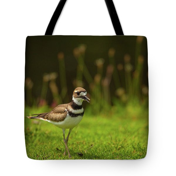 Killdeer Tote Bag by Karol Livote