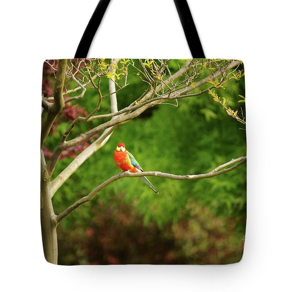 King Parrot Tote Bag by Cassandra Buckley