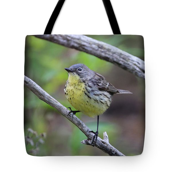 Kirtland's Warbler Tote Bag by Gary Hall