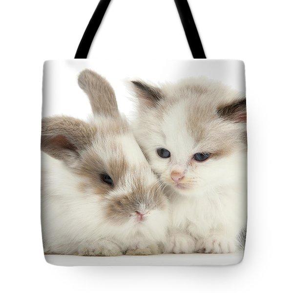 Kitten Cute Tote Bag