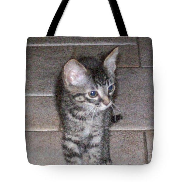 Martius Kitten Tote Bag