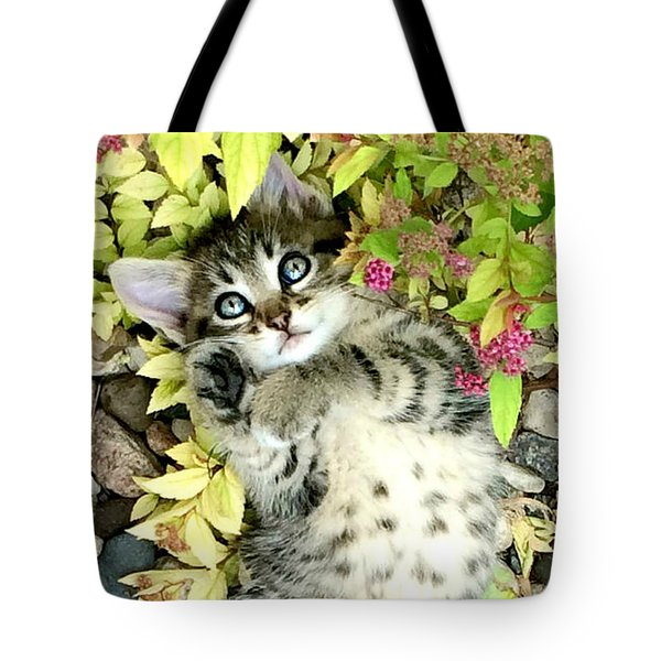 Kitten Dreams Tote Bag by Kathy M Krause