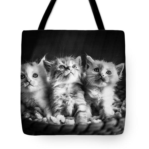Kitten Trio Tote Bag