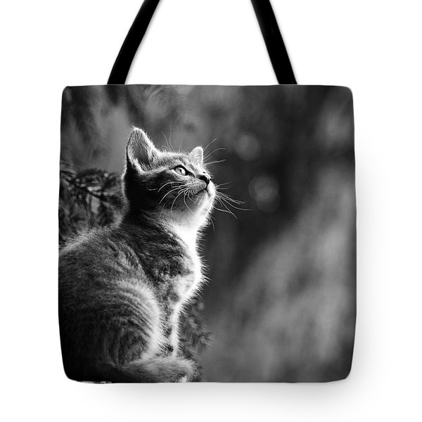 Kitten In The Tree Tote Bag