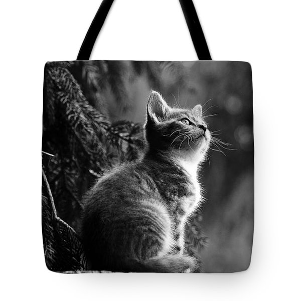 Kitten In The Tree Tote Bag
