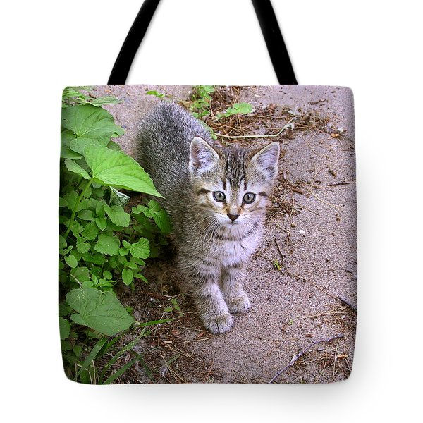 Kitten On The Patio Tote Bag by Larry Capra