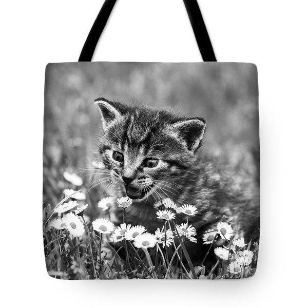 Kitten With Daisy's Tote Bag
