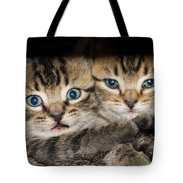 Kittens In The Shadow Tote Bag