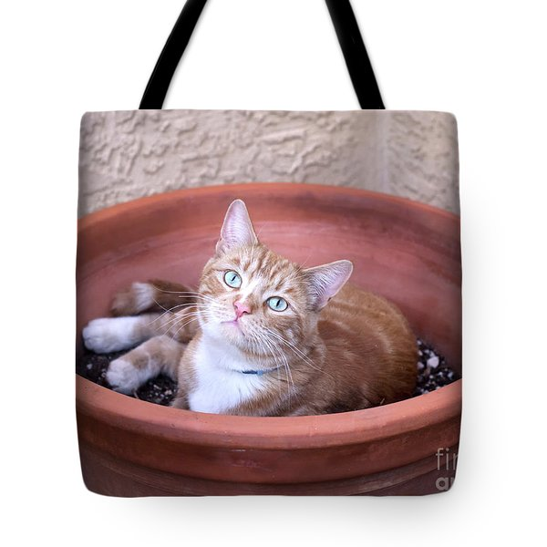 Kitty Bulbs Tote Bag
