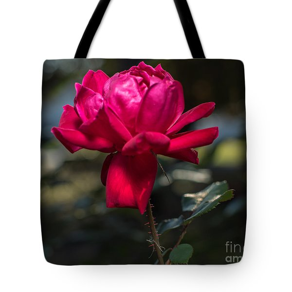 Knockout Rose II Tote Bag