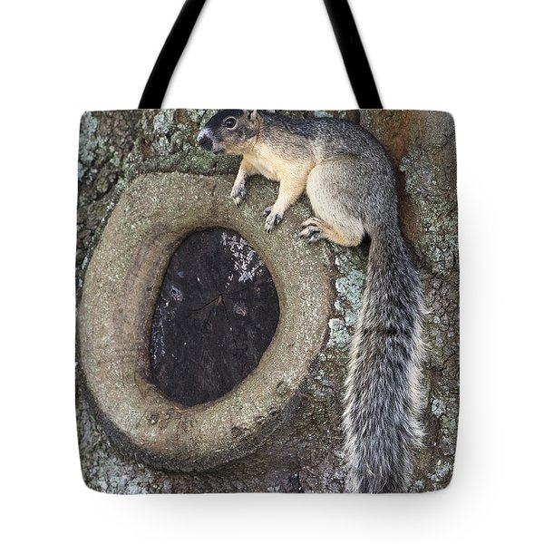 Knot A Squirrel Tote Bag