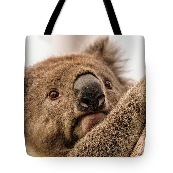 Koala 3 Tote Bag by Werner Padarin