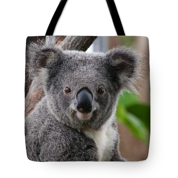 Koala Bear 7 Tote Bag