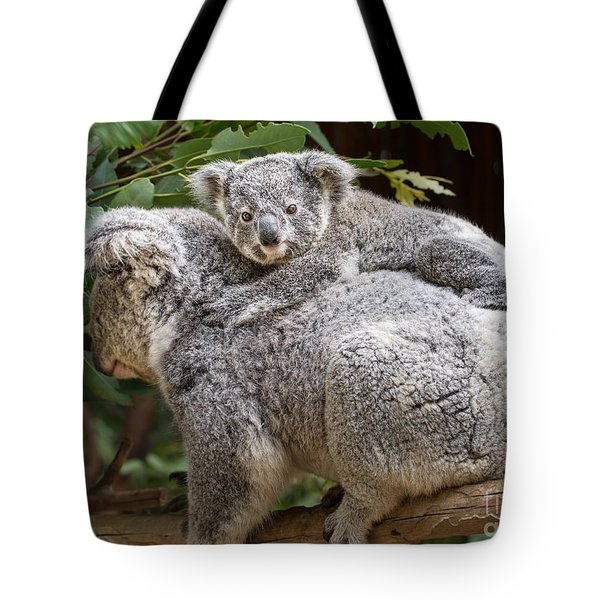 Koala Joey Piggy Back Tote Bag