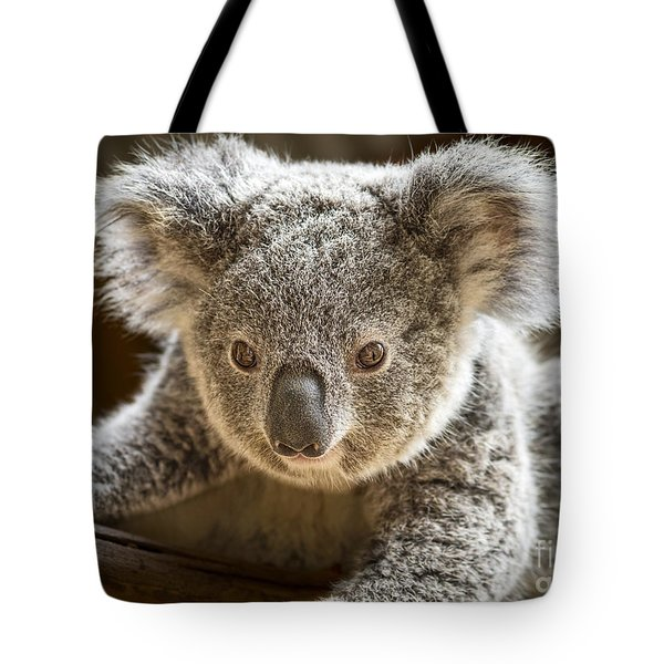 Koala Kid Tote Bag by Jamie Pham