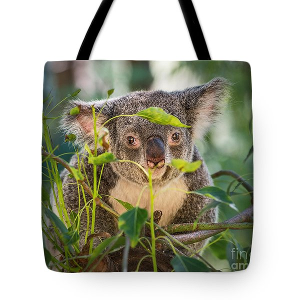 Koala Leaves Tote Bag by Jamie Pham