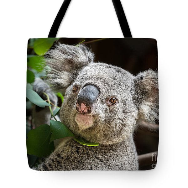 Koala Male Portrait Tote Bag by Jamie Pham