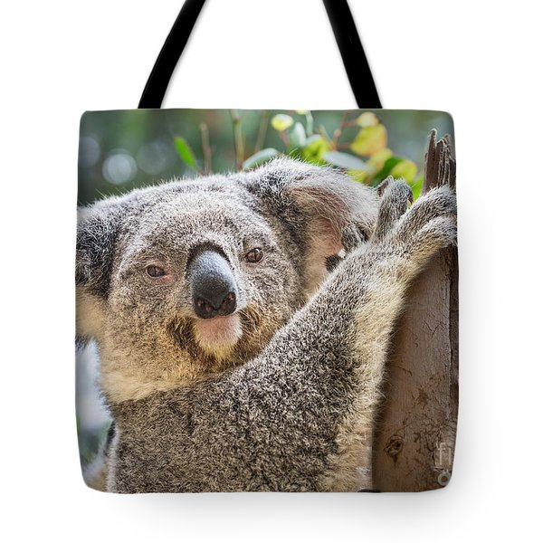 Koala On Tree Tote Bag by Jamie Pham