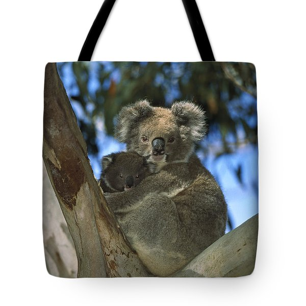 Koala Phascolarctos Cinereus Mother Tote Bag by Konrad Wothe