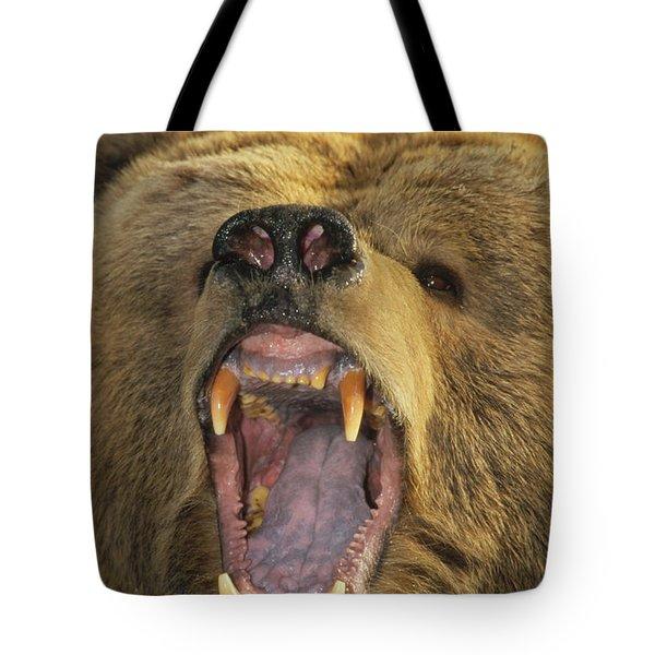 Kodiak Bear Ursus Arctos Middendorffi Tote Bag by Matthias Breiter