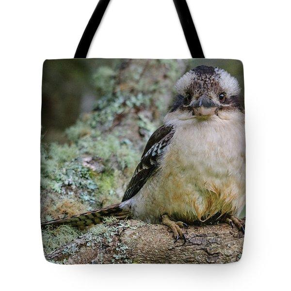 Kookaburra 3 Tote Bag
