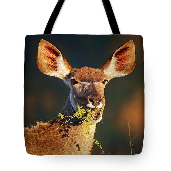 Kudu Portrait Eating Green Leaves Tote Bag