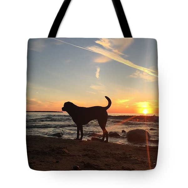 Tote Bag featuring the photograph Labrador Dreams by Paula Brown