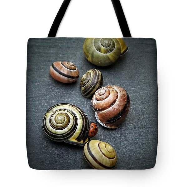 Lady Bug And Snail Shells 1 Tote Bag by Karen Stahlros
