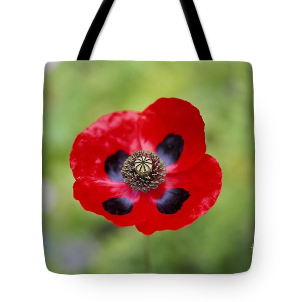 Ladybird Poppy Tote Bag