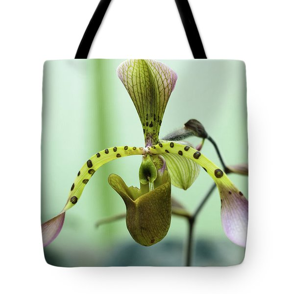 Tote Bag featuring the photograph Lady's Slipper Orchid by Cristina Stefan