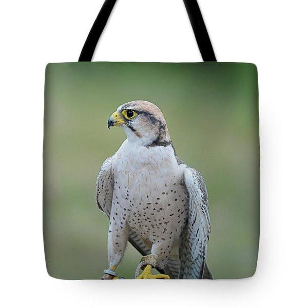Laggar Falcon  Tote Bag