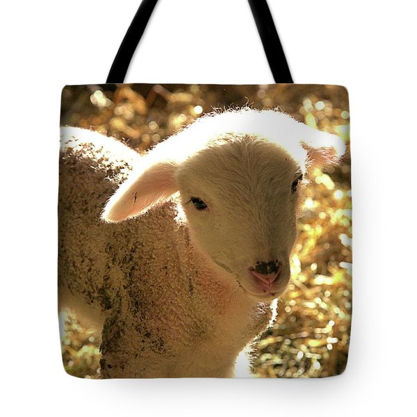 Lamb All Aglow Tote Bag