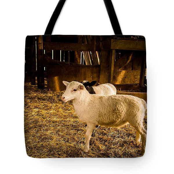 Tote Bag featuring the photograph Lambs by Jay Stockhaus