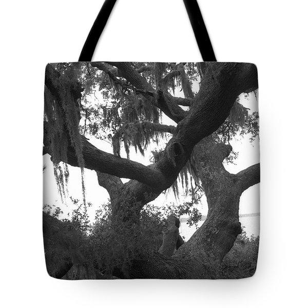 Lands End Talking Tree Tote Bag
