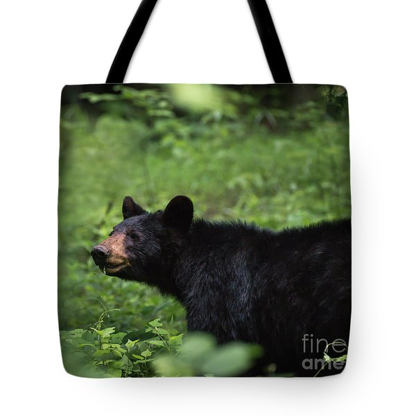 Tote Bag featuring the photograph Large Black Bear by Andrea Silies