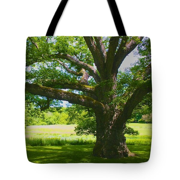 Tote Bag featuring the photograph Large Connecticut Oak by Polly Castor