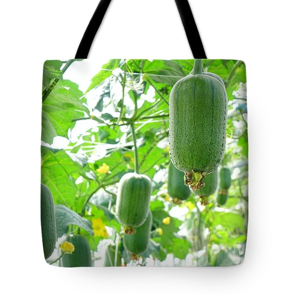 Large Silk Gourds On Vines Tote Bag