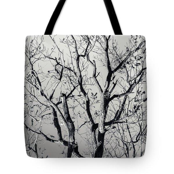Last Light Oak Tote Bag