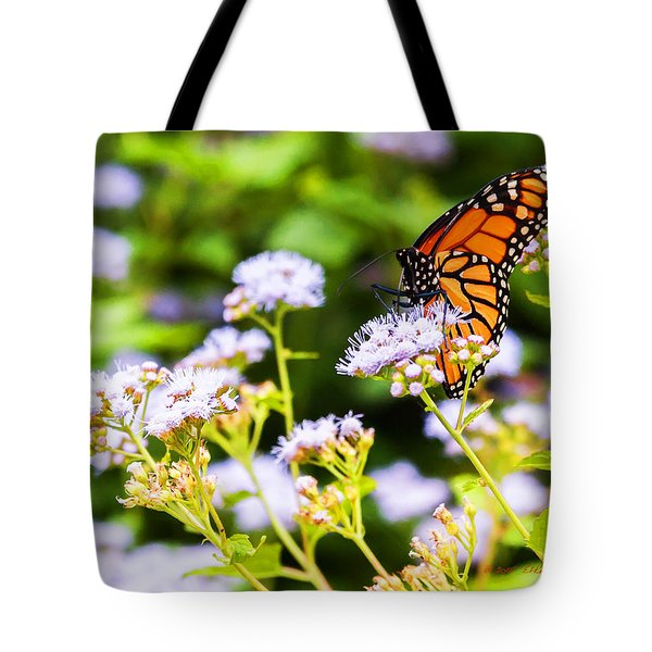 Tote Bag featuring the photograph Late In The Season Butterfly by Edward Peterson